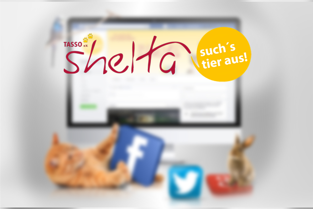 So­cial-Me­dia-Mar­ke­ting Tasso shelta