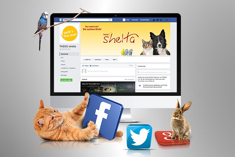 Social-Media-Marketing Tasso shelta